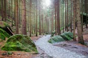 Thumbnail image of path through the forest to Pravcicka brana Pravcice Gate natural sandstone arch, Hrensko, Usti nad L